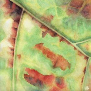 Heidrun Wettengl: Weinblatt 4, Aquarell auf Papier, 20x20 cm, 2012. Alle Rechte vorbehalten.