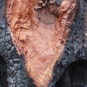 Heidrun Wettengl: Heart, Fotografie auf Alu-Dibond, 45x30 cm, 2013. Alle Rechte vorbehalten.