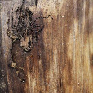 Heidrun Wettengl: Holz 3.0 (Detail 2), Wandinstallation, Holzobjekte, Objektkästen jeweils 52x52 cm, 2014. Alle Rechte vorbehalten.