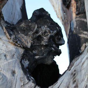 Heidrun Wettengl: Nicht-Endemisch 2, Fotografie auf Alu-Dibond, 90x60 cm, 2013. Alle Rechte vorbehalten.
