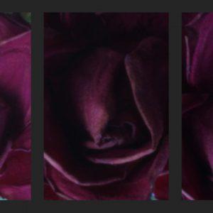 Heidrun Wettengl: Ros-Er 2, Digital-Pinhole-Serie, jeweils 21x14 cm, 2013. Alle Rechte vorbehalten.