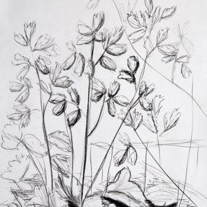 Heidrun Wettengl: Im Beet, Bleistift, Kohle auf Papier, 100x70 cm, 2011. Alle Rechte vorbehalten.