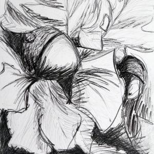Heidrun Wettengl: Nuts, Bleistift, Kohle auf Papier, 100x70 cm, 2011. Alle Rechte vorbehalten.